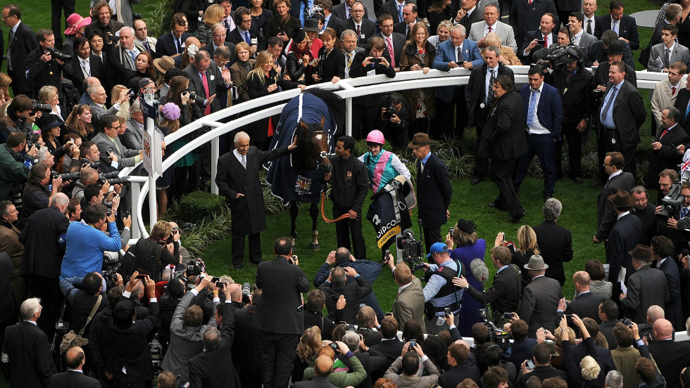 Beyond the track, Black Caviar may also have a profitable career as a breeding mare, with co-owner Madden hinting that champion British thoroughbred Frankel (pictured) could make a good match.