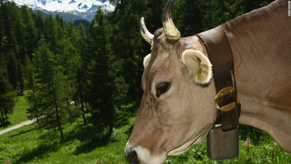 Bells have been used, especially in downhill skiing, for a long time. It started in Switzerland, where in summer the cows all walk around the mountains with bells on.