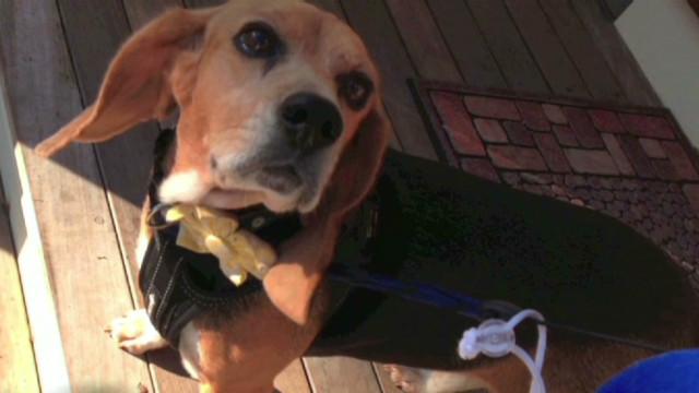 Author's unique reward for missing dog
