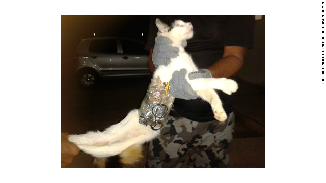 Prison guards in Brazil's northeast Alagoas state say they have foiled a jailbreak plot with a cat as an accomplice.