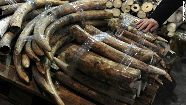 Seized ivory tusks are displayed during a Hong Kong Customs press conference on January 4, 2013.