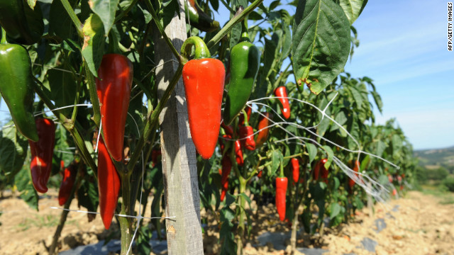 """These peppers look tough now. But they'd probably quake in fear of the Infinity pepper, in the """"world's hottest curry."""""""