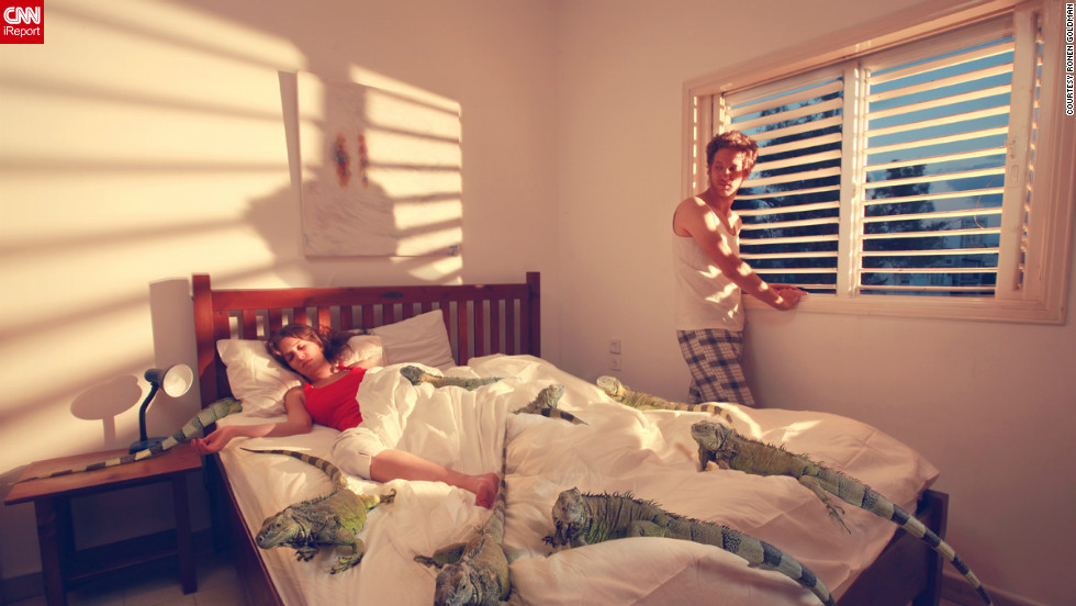 """I knew how the image was supposed to look in my mind, but was stuck trying to figure out, where do I get an iguana?"" Goldman said. The photo represents a fear of relationships, as in, ""Is there room in that bed for me?"" There was actually only one iguana, and the girl is really in bed with the lizard."