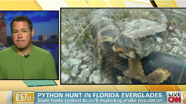 Python hunt in Florida Everglades
