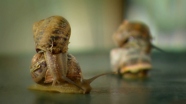 Organic snails boost Greek economy?