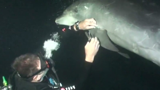 Divers rescue entangled dolphin