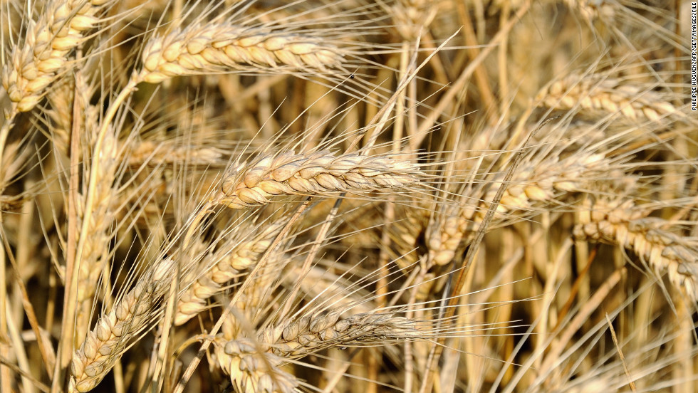 "Experts say many health problems stem from changes in food production. ""The hybridization of the native European wheat with a shorter, hardier strain from South America in the 1940s produced the particular gluten protein that triggers the sensitivity in people's digestive system,"" says Cetojevic. ""For thousands of years people ate and digested wheat without adverse effects, but we haven't yet adapted to the new protein in the hybrid variety that is now widely grown and marketed for its convenience and higher yield. People are better off eating the older strains such as spelt and kamut.""<br />"