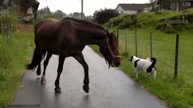 orig jtb distraction dog and horse_00004621.jpg