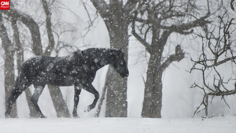 """When heavy snowfall hit Seville, Ohio, on the day after Christmas, Matthew Platz <a href=""""http://ireport.cnn.com/docs/DOC-902813"""">headed to local farms</a> to capture animals in the snow. """"I had been waiting for our first good snow of the year to get out and capture all the natural beauty in our area,"""" he said."""