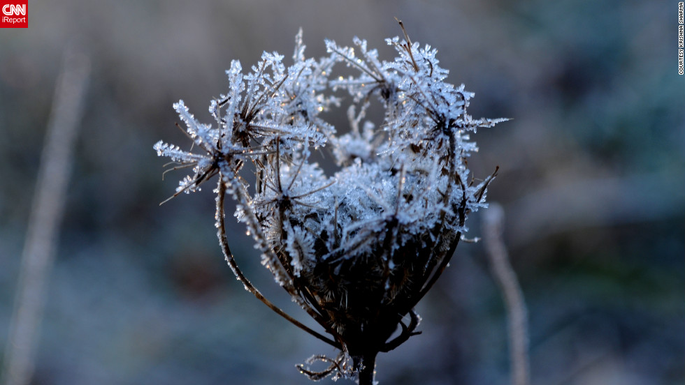 """One freezing morning changes everything. Krishna Sharma <a href=""""http://ireport.cnn.com/docs/DOC-917975"""">shared this photo</a> and others from the grassy patch next to her office parking lot. Normally, he says, the plants look """"very ordinary,"""" but a frost """"illuminates some of the intricate details"""" of even the smallest leaf."""