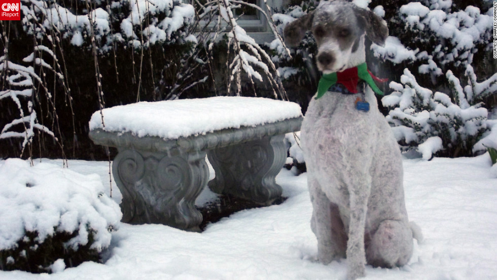"Standard poodle Huckleberry <a href=""http://ireport.cnn.com/docs/DOC-901826"">takes in the snow</a> in Martinsburg, West Virginia. Charles Connolly, who shot this photo on Christmas Eve, says Huckleberry loves snow even though it's uncommon for the area."