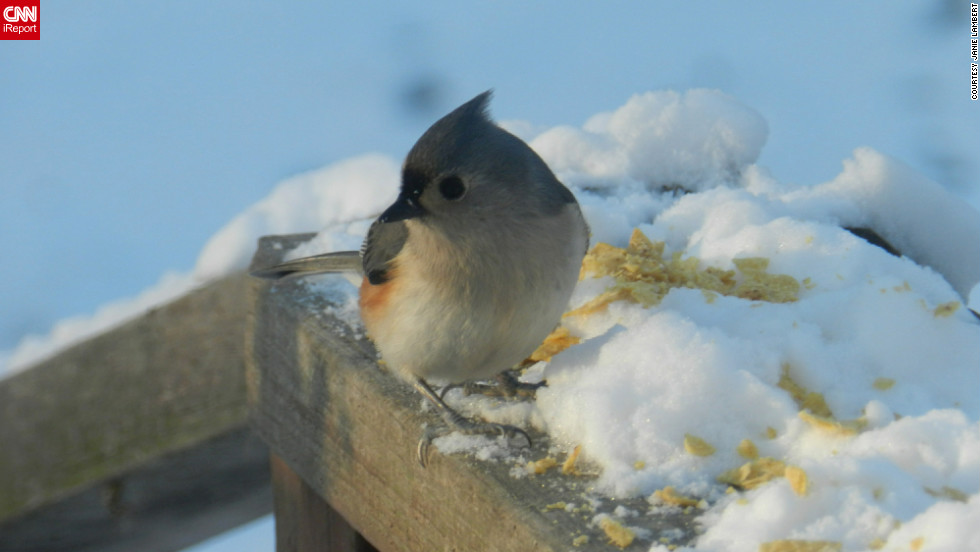 """Do you think bird feet get cold?"" wondered Janie Lambert as she <a href=""http://ireport.cnn.com/docs/DOC-915765"">snapped this photo</a> from her Hughesville, Maryland, back yard. It was about 23 degrees when she captured the image on January 24."