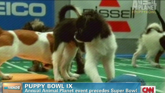 exp early.cnn.trends.puppybowl_00011428.jpg