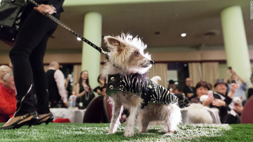 A dog poses on the runway.