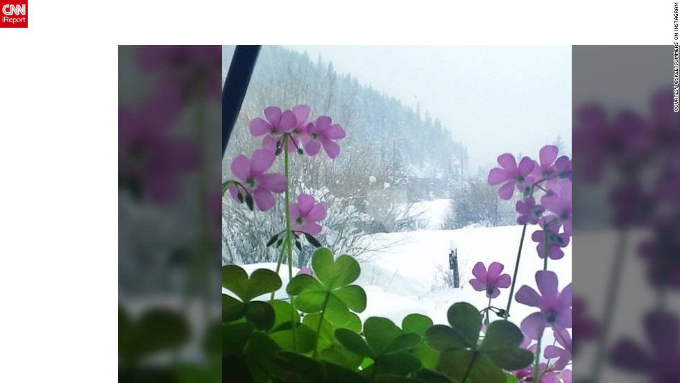 "Instagram user <a href=""http://ireport.cnn.com/docs/DOC-932552"" target=""_blank"">@skeetsummers</a> says with all the snow in Colorado right now, it's still nice enough inside to let oxalis bloom."