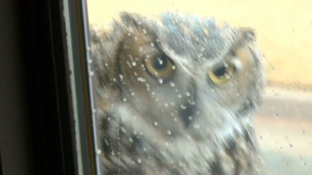 baby.owls.webcam.kfor_00005513.jpg