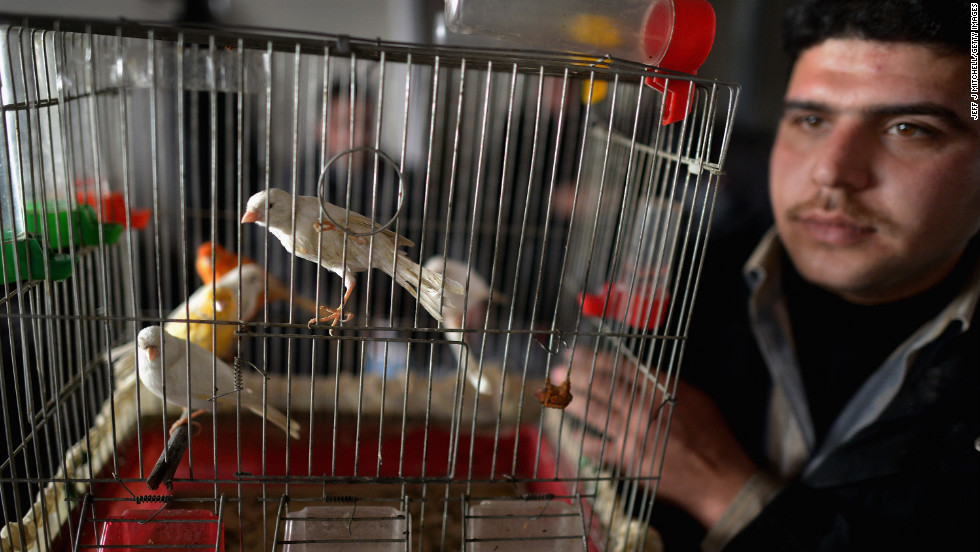 A man shows off his pet birds as new Syrian refugees arrive at the Zaatari refugee camp in January 2013.