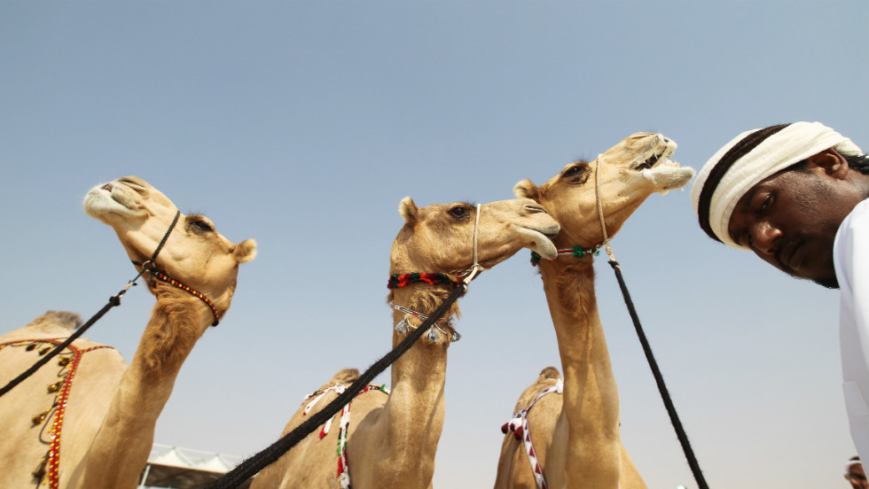 "The Al-Dhafra Camel Festival in the western region of the United Arab Emirates is a celebration of the ancient bond between humans and the ""ships of the desert."""