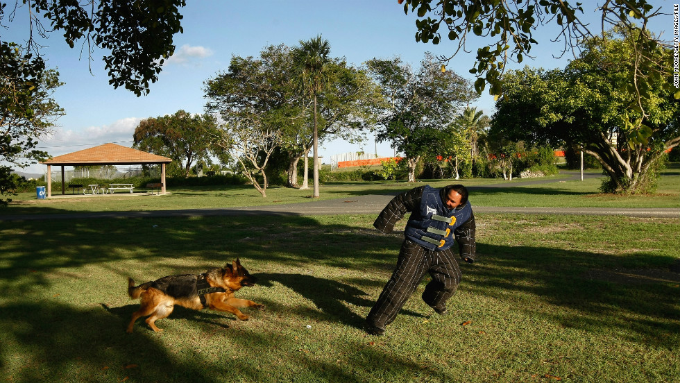 A police dog undergoes training exercises in October 2009.