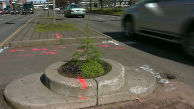 World's smallest park loses lone tree