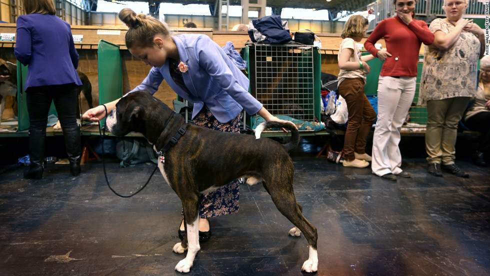 how to prepare for a dog show