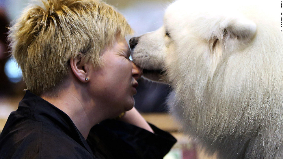 Tracey Elder is given a lick on her face while grooming her Samoyed, Bolan, on March 10.