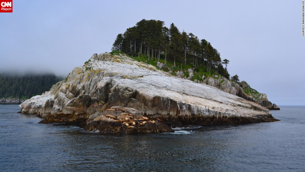 "<a href=""http://ireport.cnn.com/docs/DOC-918557"">Raimonda Ronkute</a> says this photograph left her speechless. It was taken in the southern part of Alaska in the Kenai Fjords on the way to Fox Island. ""It was one of the numerous rocks of Kenai Fjords; however, (it was) covered with sea lions. The trees on top of the rock and fog behind it seemed incredibly memorable."""