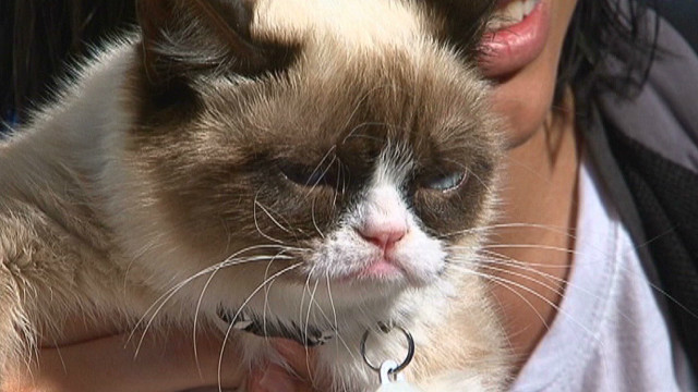 'Grumpy cat' takes grumpy to new level