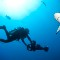 calin survey shark dive