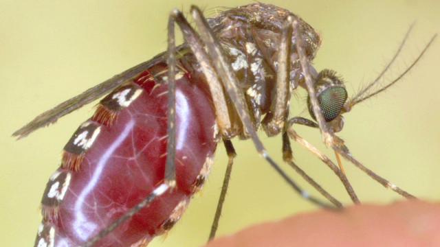 pkg giant mosquitos florida_00011020.jpg