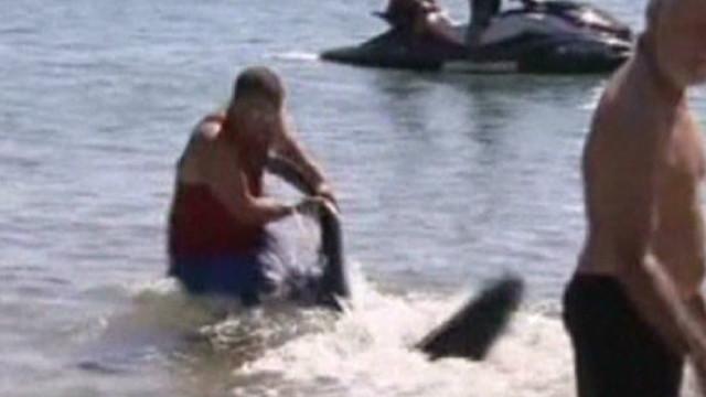 nr man saves kids sharks gets fired_00002316.jpg