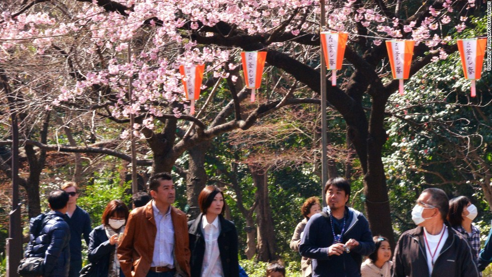 Tokyoites hit the parks over the weekend as sakura (Japanese cherry blossom) season got off to a record early start.