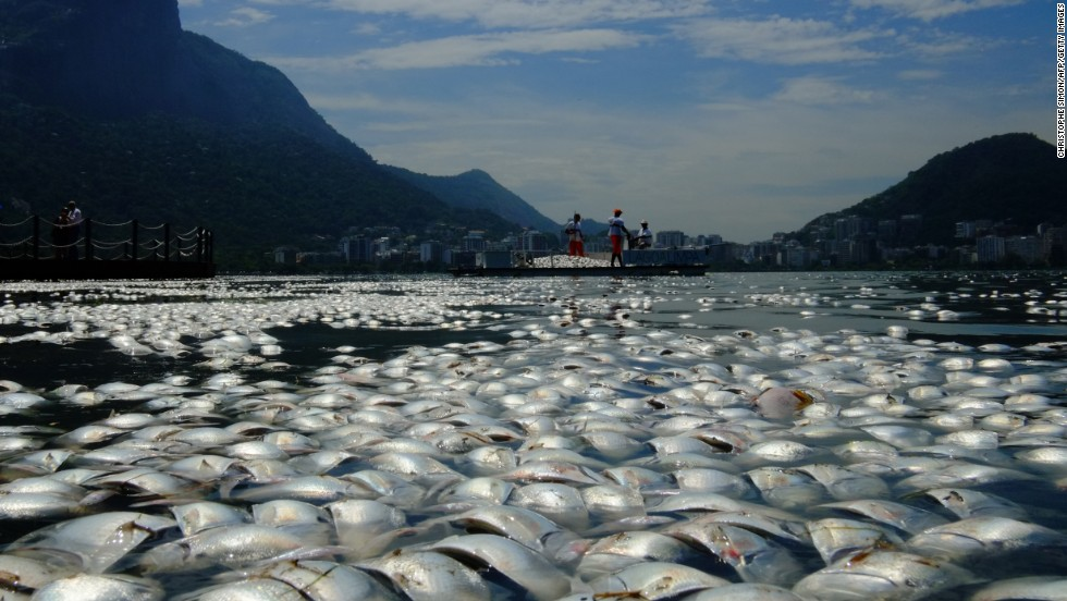 Tons of dead fish float on the waters of the Rodrigo de Freitas lagoon, beside the Corcovado mountain in Rio de Janeiro, Brazil. Threats from pollution, overfishing and climate change are putting marine life under immense strain.