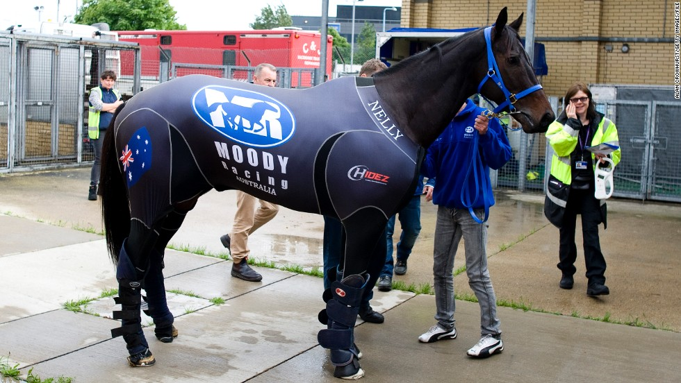 By plane, of course. Champion Australian race horse Black Caviar wore a special compression suit during her 30-hour journey from Melbourne to London. No expense was spared for the celebrity mare traveling in a $50,000 first-class airborne stable.