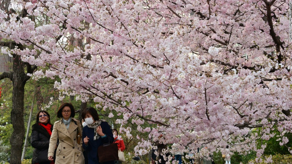 Cherry blossom trees are bloom in Tokyo on Friday, March 22, in a sure sign spring has arrived in Japan.