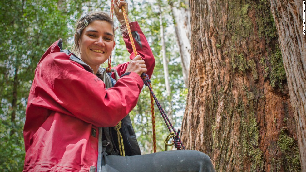 Miranda is pictured as she ascended an old growth Eucalypt tree in Tasmania's Southern Forests, where she remained for 449 days tied to a platform 60 meters above the ground.