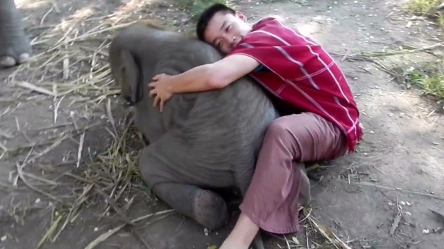 orig jtb distraction elephant cuddles_00002628.jpg