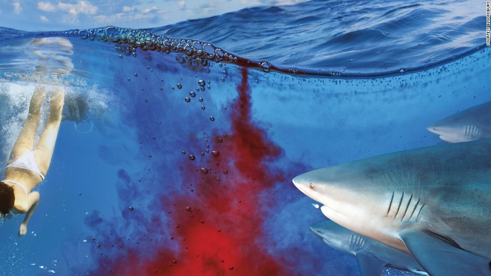 If a shark starts to zig-zag towards you, you need animal instinct. Thrust something at its super-sensitive nose or stab at its eyes or gills.