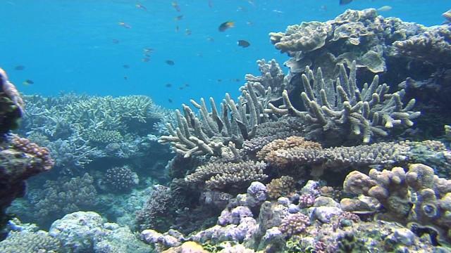pkg cousteau oceans coral reef mystery_00002001.jpg