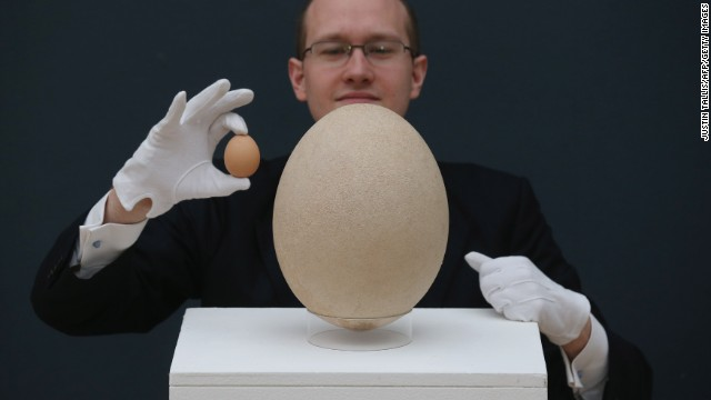 The elephant bird egg is over 100 times larger than a normal chicken egg. Stupid chickens.