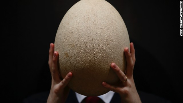 Unconfirmed: The elephant bird egg is about the same size as John Madden's head.