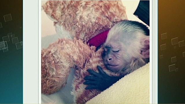 Bieber misses his monkey