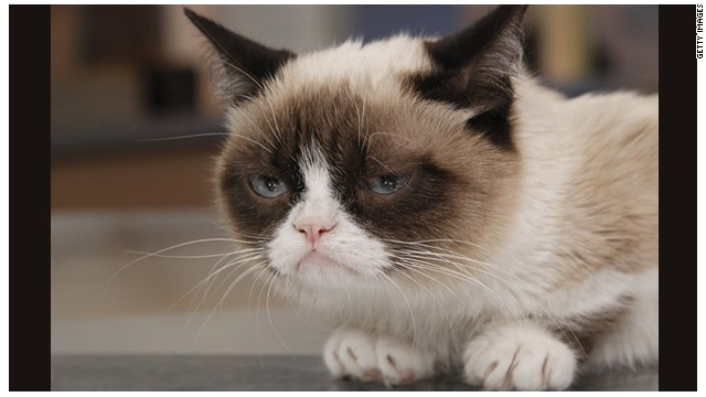 Users can share their own photos or ones from the Web, like this shot of Grumpy Cat.