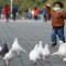 05 bird flu 0406