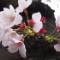 south korea blossom gallery 1