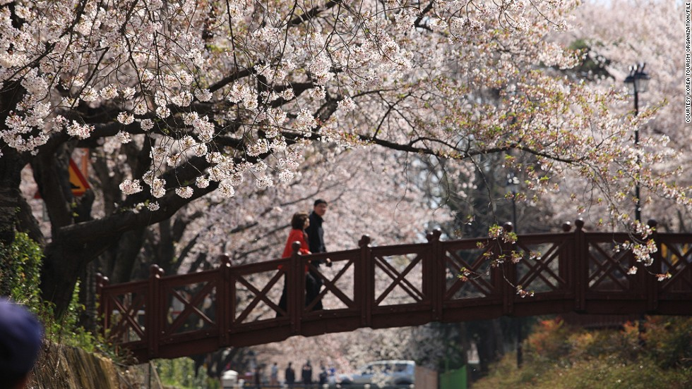 Perhaps this Jinhae bridge should be added to lists of world's most romantic spots.
