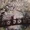 south korea blossom gallery 7