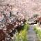 south korea blossom gallery 8