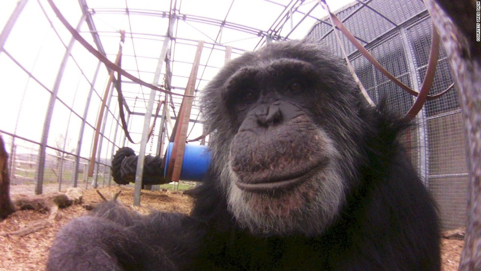 """A posing primate as captured with the Little Cyclops camera. Dash raised the money for producing the camera through crowd-funding website <a href=""""http://www.indiegogo.com/projects/world-s-first-digital-lofi-fisheye"""" target=""""_blank"""">Indiegogo</a>. Only 1,000 will be made in the first run and sold for a price of $100 each."""
