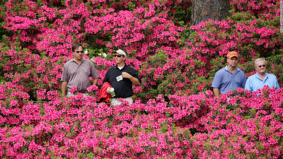 The Azaleas are back in full bloom after last year's cold snap. Each hole on the course is named after a plant or shrub, while the 61 large Magnolia trees still stand proud either side of the path leading from the entrance to the clubhouse.